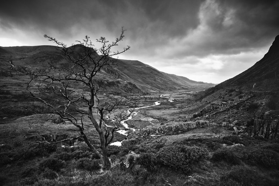 Ent Sentinel, Ogwen Valley