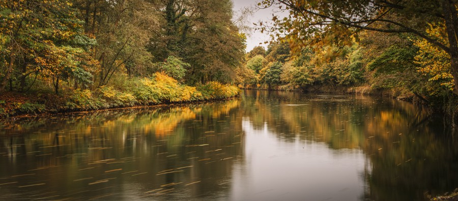River Taff In Full Autumnal Bloom, Pontcanna