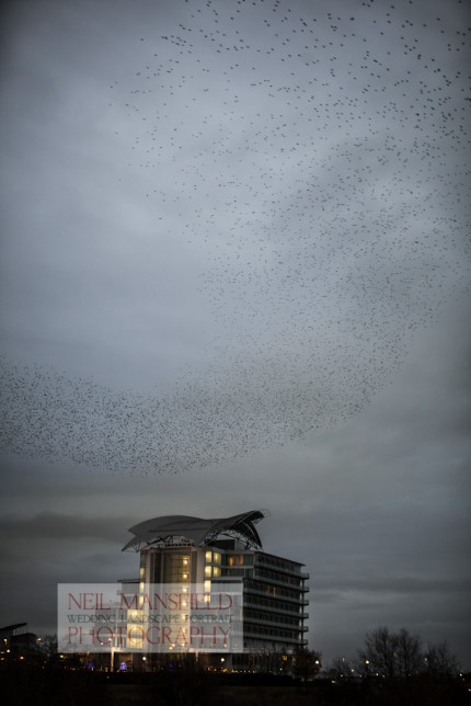 Murmuration-Cardiff-Bay-1