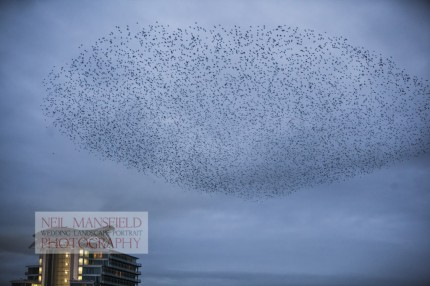 Murmuration-Cardiff-Bay-2