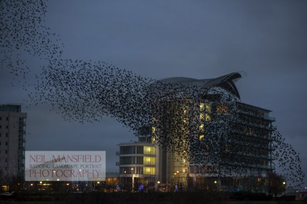 Murmuration-Cardiff-Bay-4