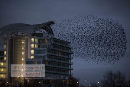 Murmuration-Cardiff-Bay-5