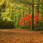 Red Tree, Cefn Onn Park Cardiff