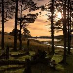 Upper Neuadd Reservoir Treeline, Brecon Beacons