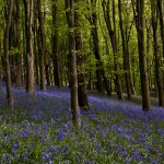 Cardiff Bluebells Landscape Photography Workshop Cardiff May 8th 2015