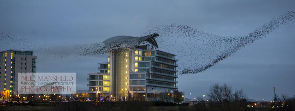 Cardiff Bay Murmuration