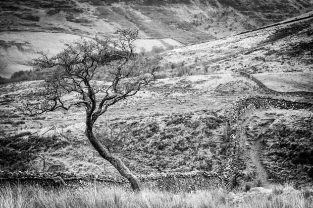 Craig Cerrig-Gleisiad a Fan Frynych National Nature Reserve