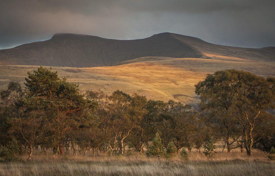Mynydd Illtud Common Brecon Beacons